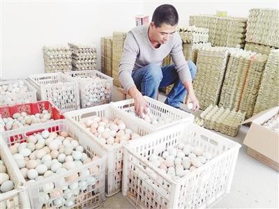 漯河青年返乡创业搞养鸡 不料鸡蛋大量滞销