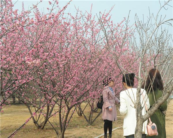 绿博园问花节将于3月25日盛大启幕