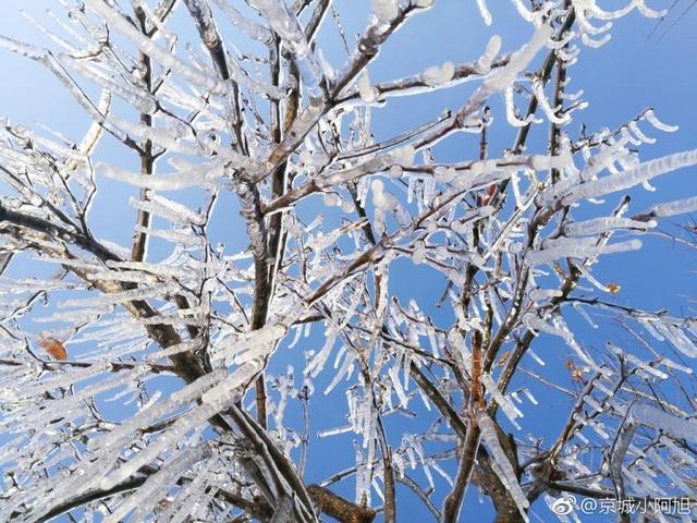 河南一高校校园内现冰挂 晶莹美如画