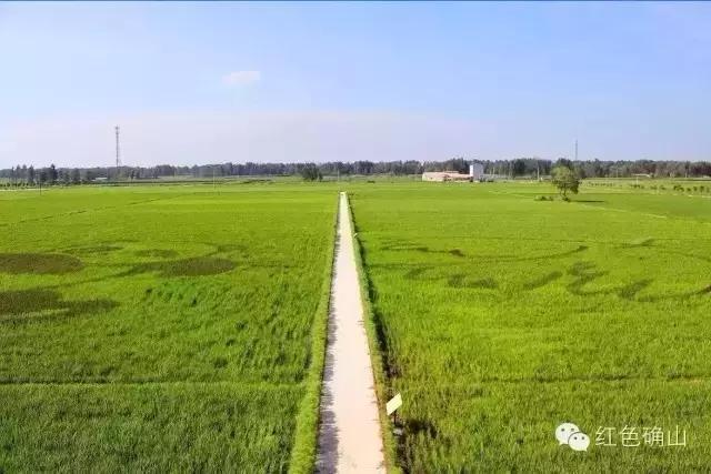 确山县留庄镇富硒大米喜获丰收 一粒米托起一个产业