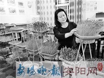 """安阳一女子在自家屋里种了""""菜园"""" 有滋有味"""