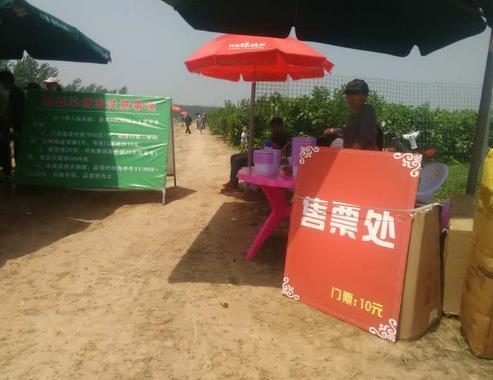 一斤桑葚五十元 周口生态采摘园价格遭市民吐槽