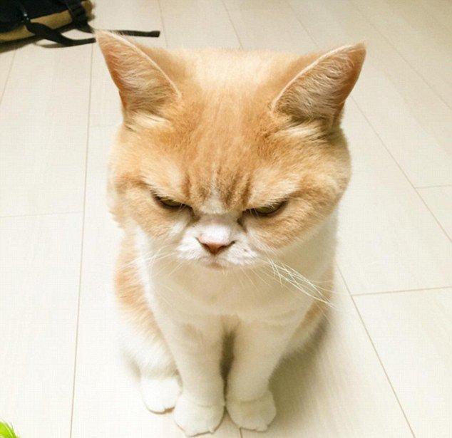 表示生气的动物图片