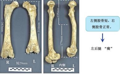 揭开动物考古神秘面纱 一具熊骨带你回到3000年前