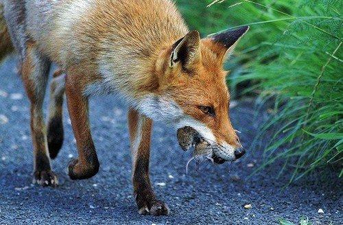 这张照片让bbc野生动物杂志的哺乳动物专家都赞叹不已,他说从未见到过