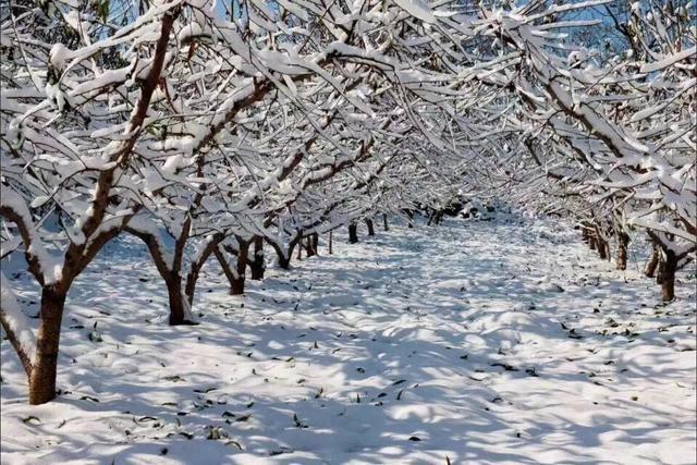 这里常年17度 依然拥有盛世雪景