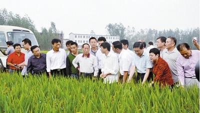 四期超级稻信阳首种产量高 袁隆平:很不简单