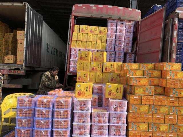 【新春走基层】探秘河南最大的农产品批发市场