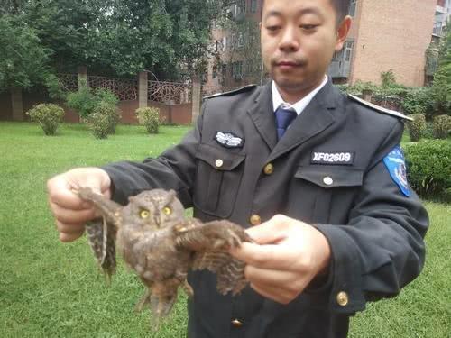 热心人从流浪狗嘴里救下一只鸟 没想到竟是国家二级保护鸟类