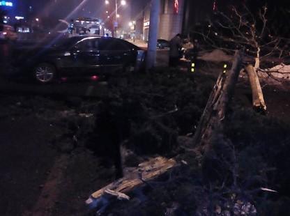 郑州轿车司机躲车踩刹车 行道树被拦腰撞断
