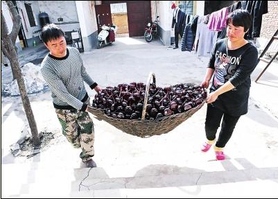 河南:祖传做琉璃响 爷俩月入两三万