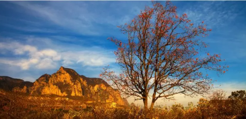 秋天最值得来的地方 最惊艳的秋色尽在青龙峡!
