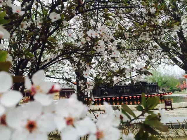 看《大宋·东京梦华》 不负春分好时光