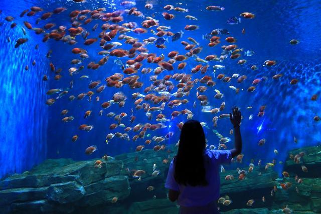 清明小极地带着孩子来开封动物海洋馆和长假常德城区一日游攻略图片