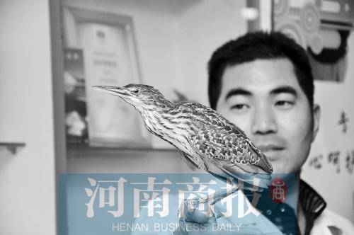 美丽鸟忽然飞进郑州小店 系国度二级维护动物
