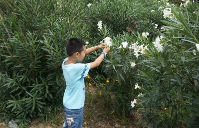 郑州街头一鲜花有毒 专家:误食或有生命危险
