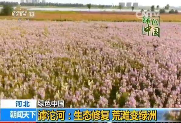 面积达3500亩的滹沱河花海