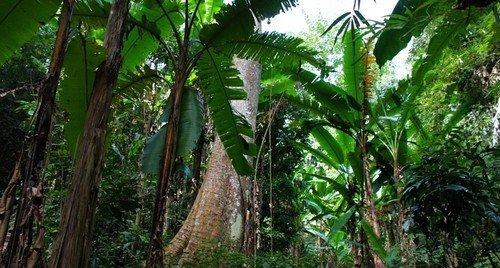 2平方公里,它的热带雨林,南亚热带常绿阔叶林,珍稀动植物种群,以及
