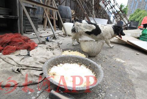郑州一家饭店养4条狗 质疑养宠物还是卖狗肉?