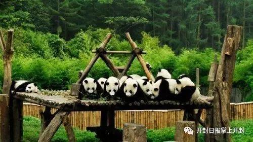 重磅!开封将建野生动物园 耗资32亿
