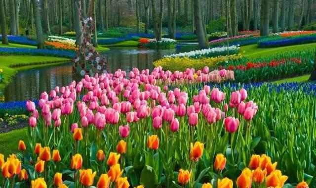 五彩大地郁金香文化节 4月1日花开满园