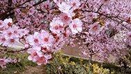 郑州的花都开好了