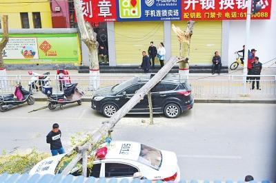 """郑州一棵60多年大树突然倒下 两辆汽车""""遭殃"""""""