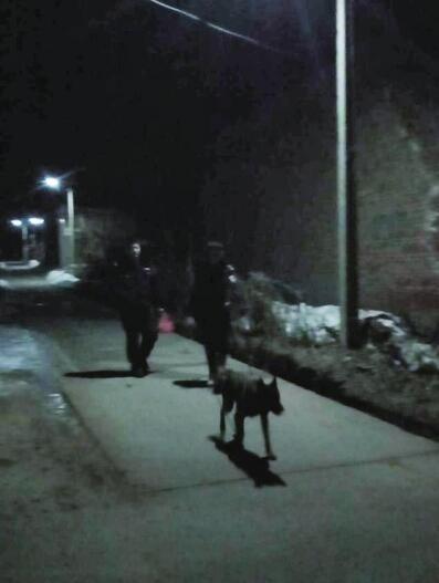 三门峡82岁老人走失 民警两次增援带警犬搜寻