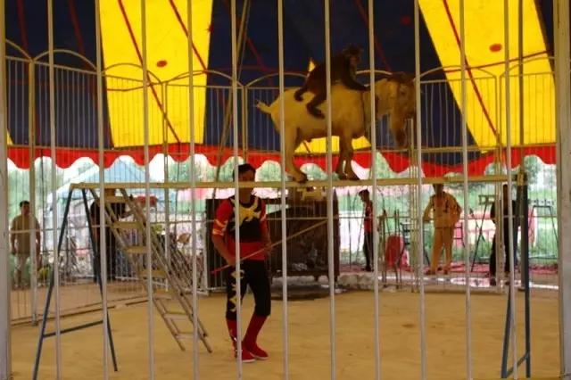 """弘亿庄园""""中原童话王国""""暑期欢乐游第一波重磅来袭 狮虎大马戏隆重呈现"""