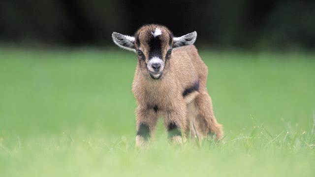 """《一拍集合》有奖征集令:羊年看""""羊""""相"""