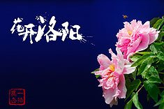 """012期:""""银""""黄""""杏""""趣"""