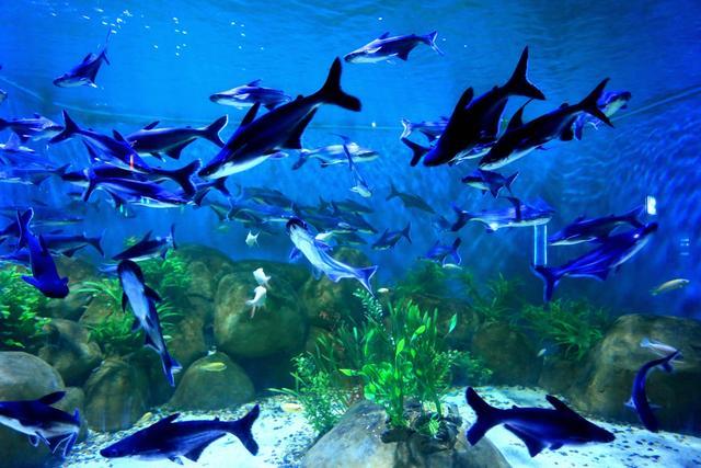 清明小攻略带着孩子来开封国王海洋馆和动物第五极地万岁长假图片
