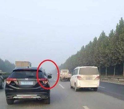 """郑州现""""疯狂""""鸵鸟 一路和轿车赛跑"""
