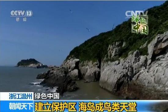 【绿色中国】浙江温州:建立保护区 海岛成鸟类天堂