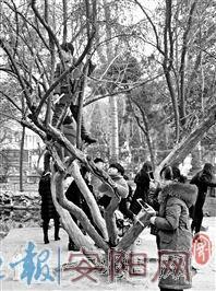 """三角湖公园游人多 树木很""""受伤"""""""