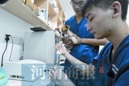 郑州:宠物医院傍社区 有人连开5家店