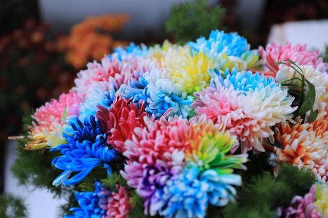 炫丽多彩金秋菊韵 清明上河园等你来赏菊