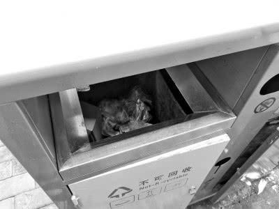 郑州垃圾箱只有两种 吃剩的早餐扔进哪种域