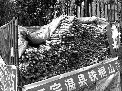 河南铁棍山药大跌 2010年每斤40元现每斤7元