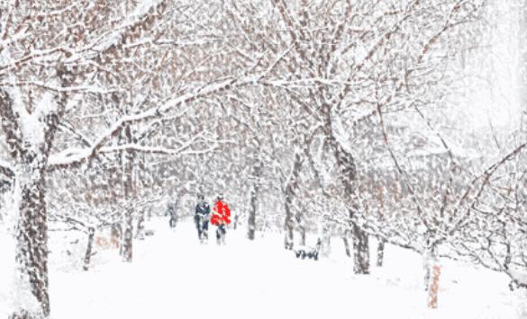河南多地大雪来袭!本周将连下4天!强冷空气霸气回归