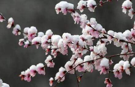 河南多地出现桃花雪 3月下旬下雪的原因在这