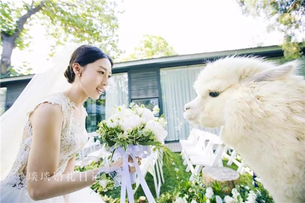 """还有这种""""骚""""操作?这对新人的婚礼狂欢趴上 羊驼大白实力抢镜"""