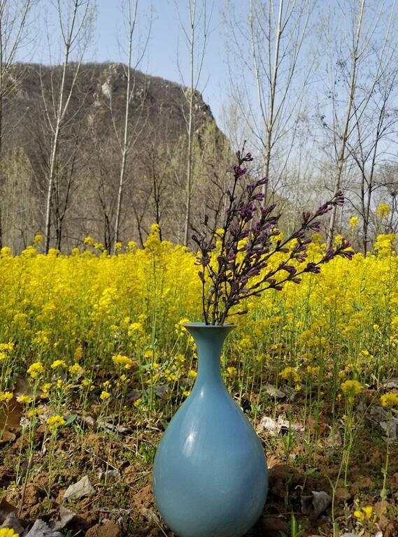 这个春天,赴一场杏花与汝瓷之约 寻芳与寻宝可兼得!