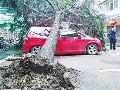 南阳一棵大树突然倒下 砸坏旁边三辆轿车