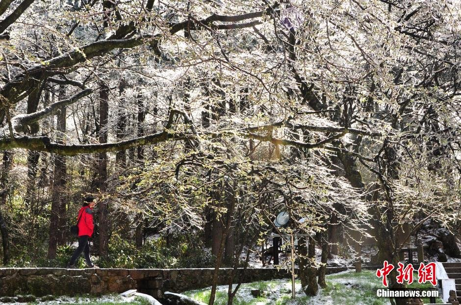 山4月飘雪宛如冰雪童话图片