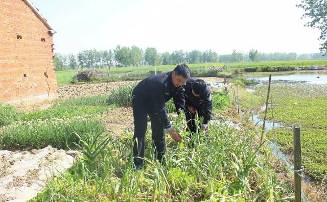 息县查获5宗合法栽种罂粟案 壹村民竟种700株
