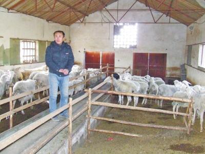 """辉县男人回国创业""""养羊""""快收成被偷赏格找线索"""