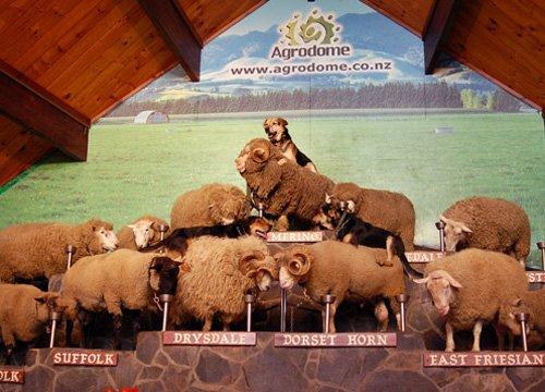 阿格罗多姆农场之旅