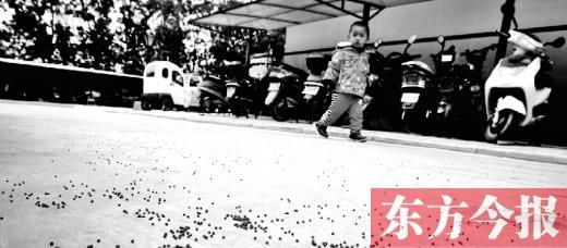 郑州小区挨着射击场 居平易近称走路像穿过枪林弹雨