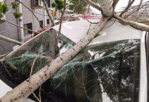 河南一小区一棵树突然倾倒 砸坏三辆车